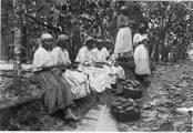 plantation 3